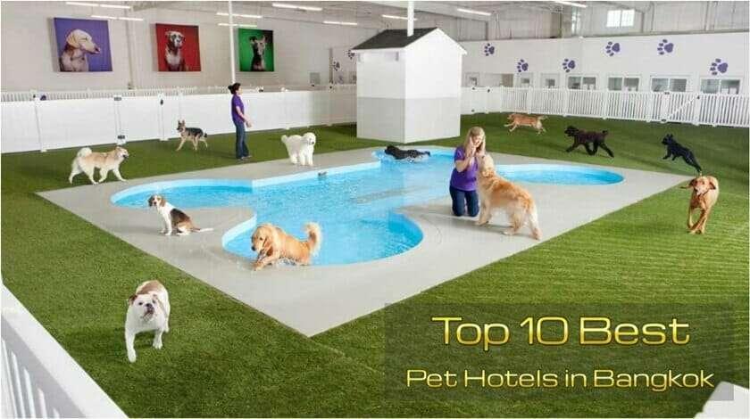 โรงแรมฝากสัตว์เลี้ยง