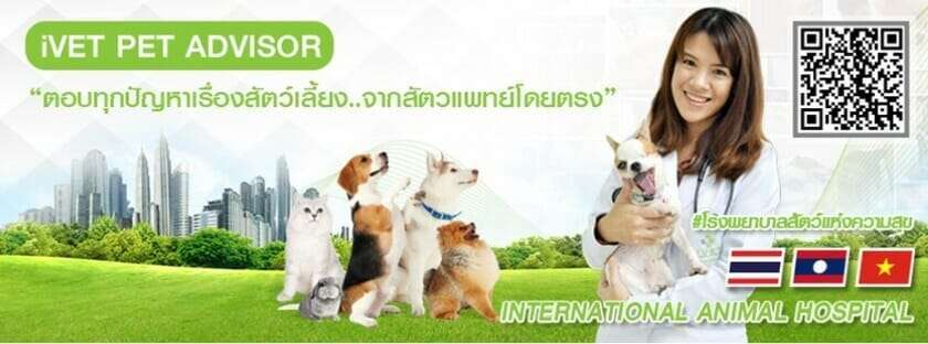 Pet Hotel Bangkok