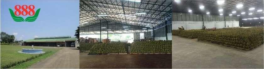 โรงงานผลไม้อบแห้ง ขายส่ง