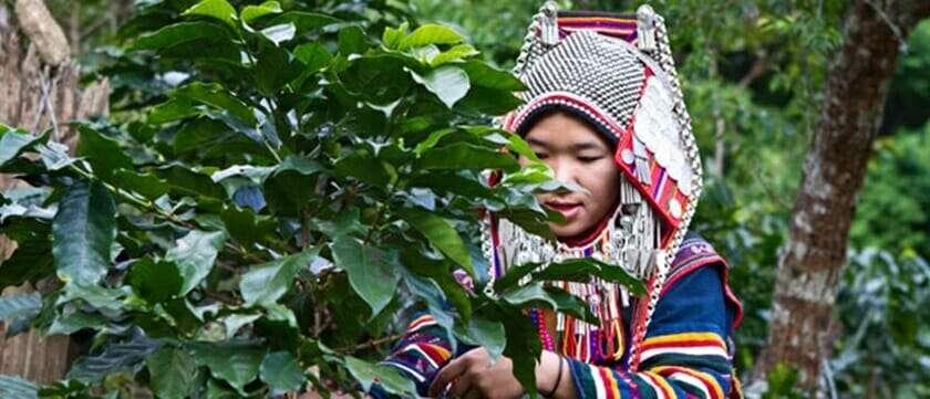 โรงงานผลิตกาแฟและกาแฟสำเร็จรูป