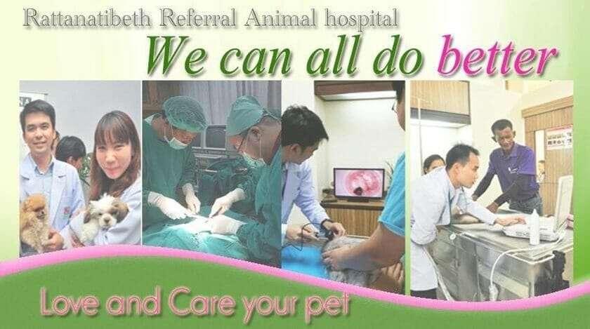 โรงพยาบาลรักษากระต่าย