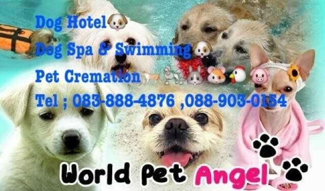 Dog Hotel Bangkok