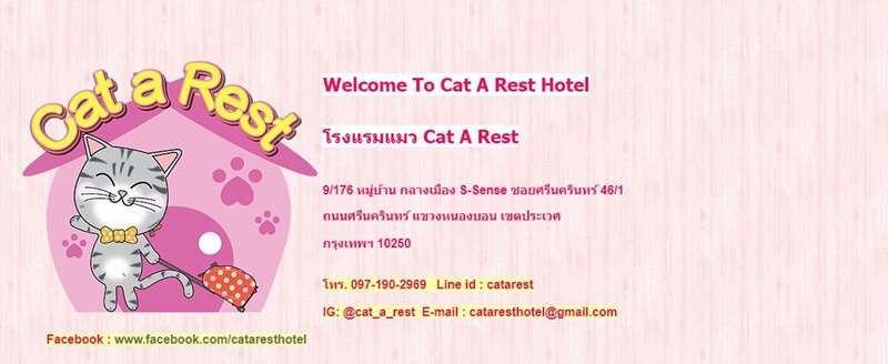 ธรุกิจโรงแรมแมว