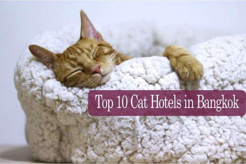 บริการโรงแรมแมว