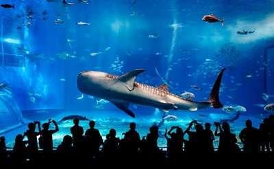 พิพิธภัณฑ์การเดินสมุทร Maritime Experiential Museum & Aquarium (MEMA)