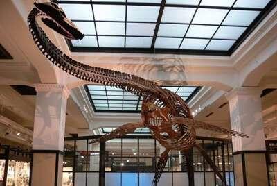 พิพิธภัณฑ์ธรรมชาติและวิทยาศาสตร์แห่งชาติ (National Museum of Nature and Science)