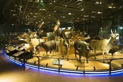 พิพิธภัณฑ์ธรรมชาติและวิทยาศาสตร์แห่งชาติ