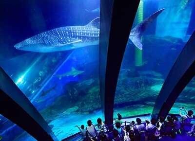 พิพิธภัณฑ์สัตว์น้ำ Sumida Aqurium