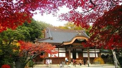 วัดจินไดจิ (Jindaiji Temple)