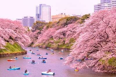 สวนจิโดริงะฟูจิ(Chidorigafuchi)