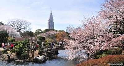 สวนชินจูกุเงียวเอน(Shinjuku Gyoen)