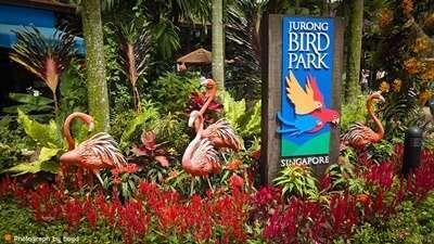 สวนนกจูร่ง (Jurong Bird Sanctuary)