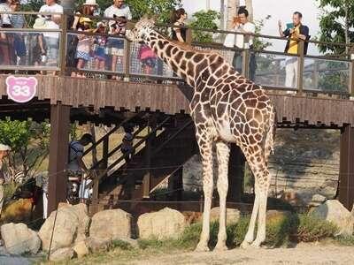 สวนสัตว์ทามะ (Tama Zoological Park)
