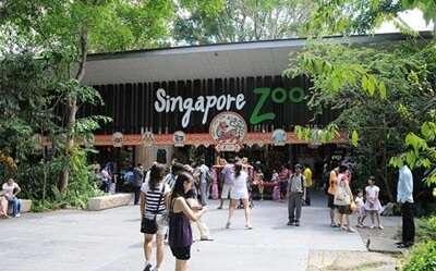 สวนสัตว์สิงคโปร์ Singapore Zoo