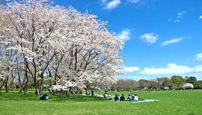 สวนสาธารณะคินุตะ (Kinuta Park)