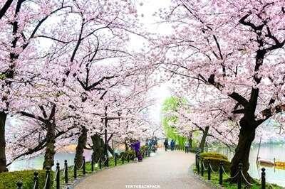 สวนสาธารณะอุเอะโนะ (Ueno Park)
