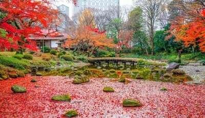 สวนโคอิชิกาว่า โคระคุเอน (Koishikawa Korakuen Garden)