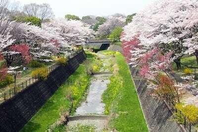 สวนโชวะ คิเนน(Showa Kinen Park)