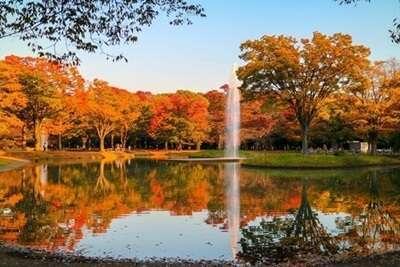 สวนโยโยกิ(Yoyogi Park)