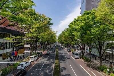 โอโมเตะซันโดอาโอยาม่า (Omotesando Aoyama)