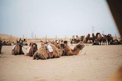 ขี่ม้าชมทะเลทราย