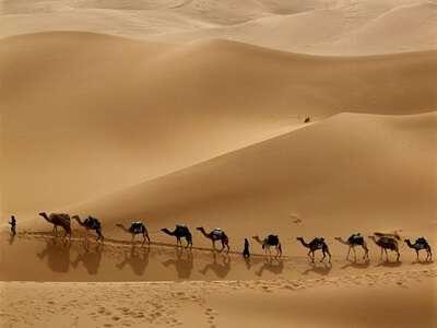 ทะเลทรายซาฟารี