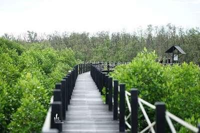 ป่าชายเลนเพื่อการท่องเที่ยวเชิงนิเวศ