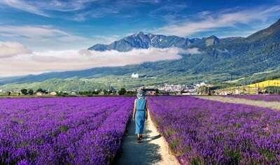 เส้นทางสายลาเวนเดอร์(Road of lavender)