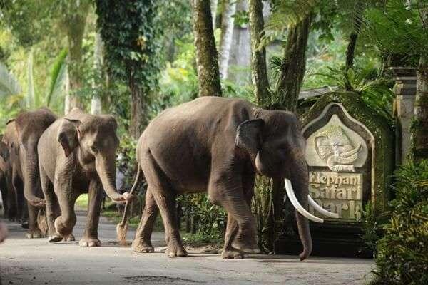Elephant Safari Park North Ubud