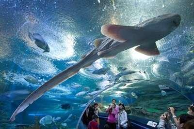 Underwater World Pattaya
