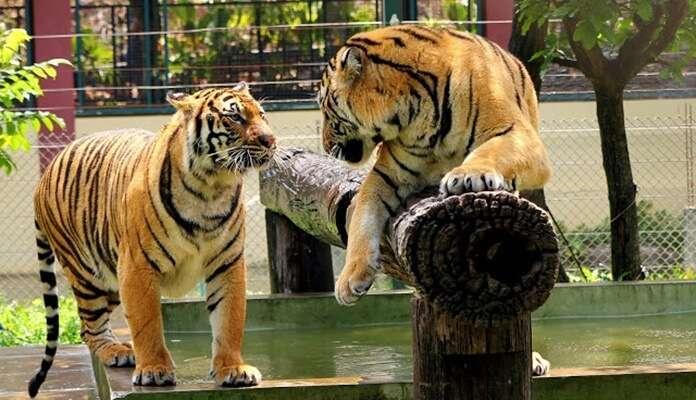 คุ้มเสือแม่ริม