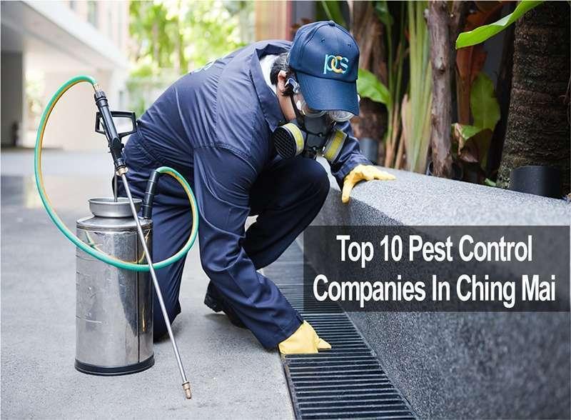 10 อันดับ บริษัทกำจัดปลวกและกำจัดแมลงรบกวนในเชียงใหม่