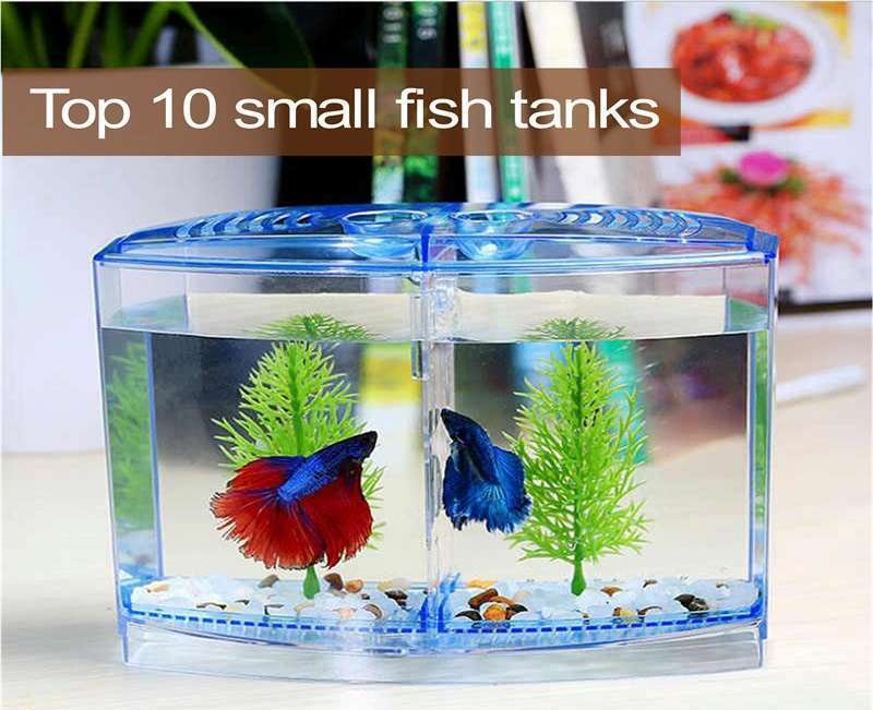 10 อันดับ ตู้ปลาขนาดเล็กที่สามารถซื้อออนไลน์ง่ายๆ