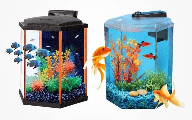 ปลาทองอาศัยอยู่ในถังขนาดเล็กได้ไหม