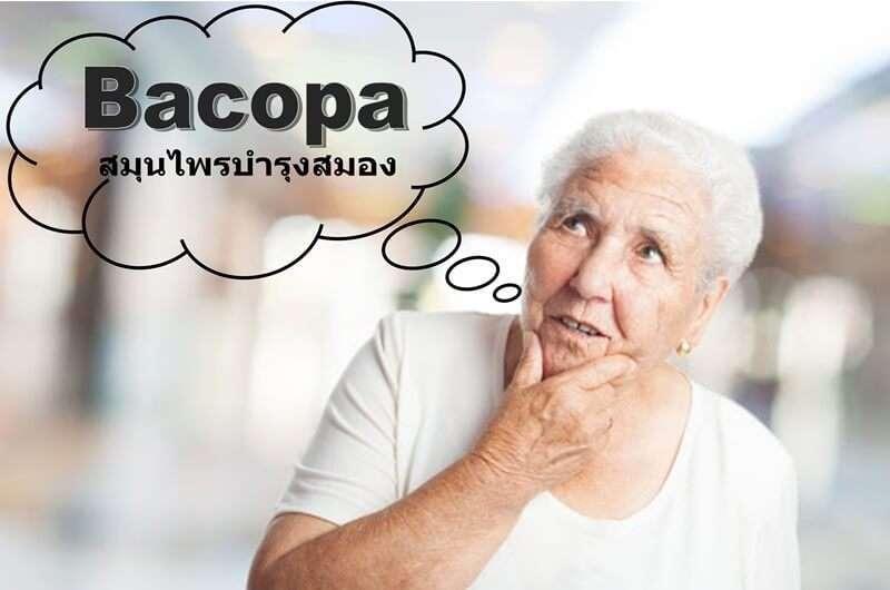 อยากความจำดีต้องลอง10 ผลิตภัณฑ์เสริมอาหาร bacopa สมุนไพรบำรุงสมองให้แข็งแรง 1