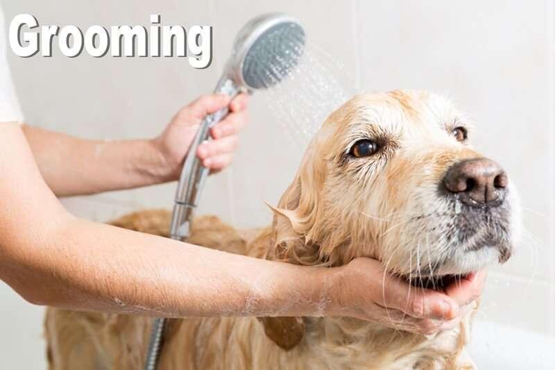 ชี้เป้า 10 อันดับร้านบริการอาบน้ำตัดขนทั่วกรุงเทพ เพิ่มความน่ารักให้สัตว์เลี้ยงคุณ 1