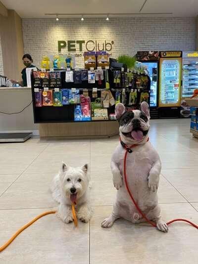 10 ร้านตัดขนสัตว์เลี้ยงในกรุงเทพฯ บริการดี คุณภาพเยี่ยม [wpsm_custom_meta type=date field=year] 2