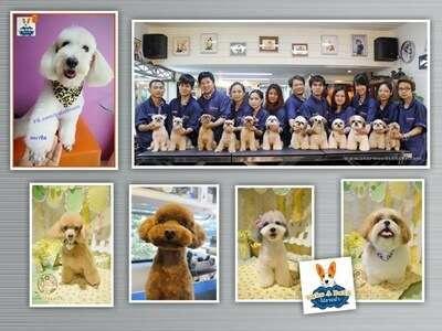 ชี้เป้า 10 อันดับร้านบริการอาบน้ำตัดขนทั่วกรุงเทพ เพิ่มความน่ารักให้สัตว์เลี้ยงคุณ 11