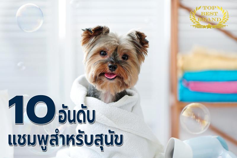 คนรักสุนัขห้ามพลาด แชมพูสำหรับสุนัข 10 แบรนด์ดัง ช่วยบำรุงผิวหนังให้ขนนุ่มสลวยดูแข็งแรง [wpsm_custom_meta type=date field=year] 1