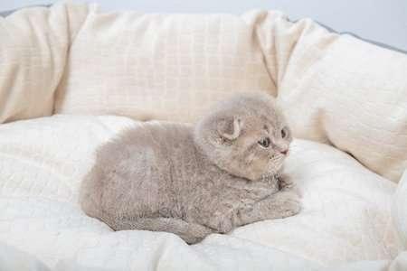 10 เปลแมว คุณภาพดี น้องแมวชอบที่นิยมมากของปี [wpsm_custom_meta type=date field=year] 3
