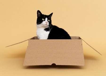 10 เปลแมว คุณภาพดี น้องแมวชอบที่นิยมมากของปี [wpsm_custom_meta type=date field=year] 5