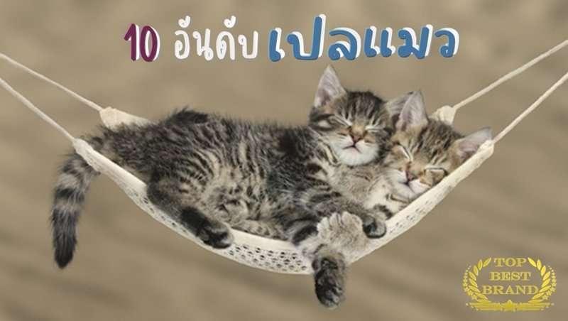 10 เปลแมว คุณภาพดี น้องแมวชอบที่นิยมมากของปี [wpsm_custom_meta type=date field=year] 1