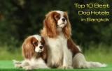 ปักหมุด 10 โรงแรมสุนัขที่คนรักสุนัขไม่ควรพลาด