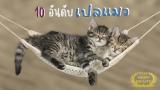 10 เปลแมว คุณภาพดี น้องแมวชอบที่นิยมมากของปี 2021