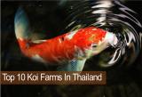10 ฟาร์มปลาคาร์ฟที่เจ๋ง ยอดนิยมในกรุงเทพ