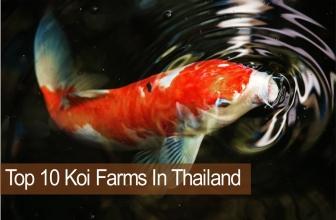 10 อันดับฟาร์มปลาคาร์ฟที่เจ๋งในกรุงเทพ