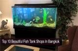 10 ร้านขายตู้ปลาสวยงามในกรุงเทพ ที่คนรักปลาไม่ควรพลาด
