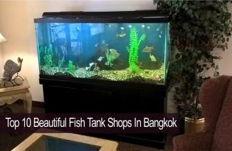 10 อันดับร้านขายตู้ปลาสวยงามใน กรุงเทพ