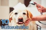 10 ร้านตัดขนสัตว์เลี้ยงในกรุงเทพฯ บริการดี คุณภาพเยี่ยม 2021
