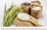 Top 10 สายพันธุ์ข้าวไทย ที่อยากให้ทุกคนได้ลองหามากิน